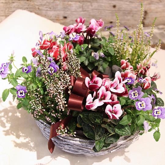 季節の寄せ鉢