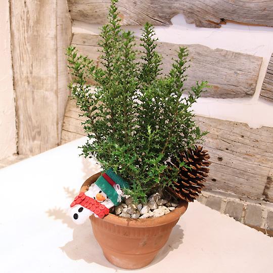 クリスマス,ヒイラギの鉢植え