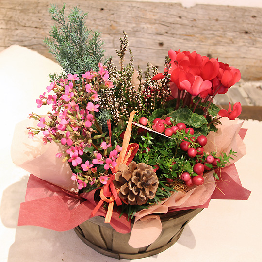 季節の寄せ鉢,クリスマス